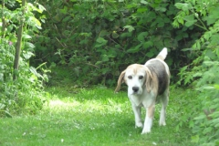 honden_in_speelweide_10