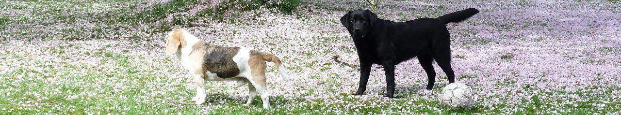 Dogotel, honden- en kattenpension